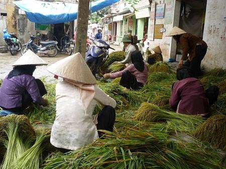 người dân làm cốm làng Vòng